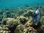 Red Sea Hols 048
