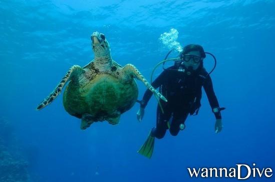 scuba diving photo