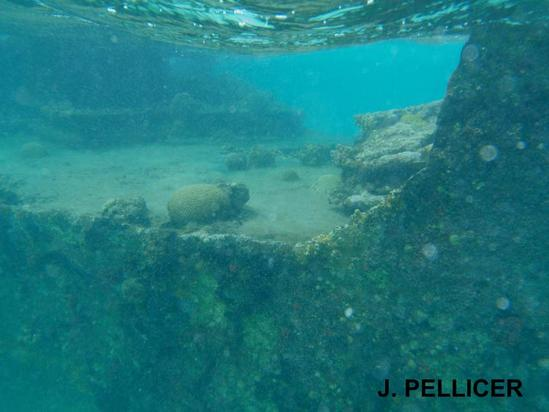 San Blas Panama Isla Perro