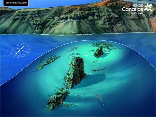 Best Canary Island To Dive