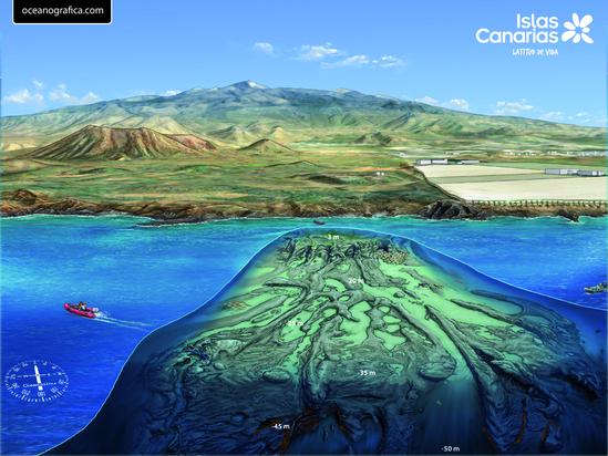 Roncadores Del Faro Diving In Tenerife Canary Islands