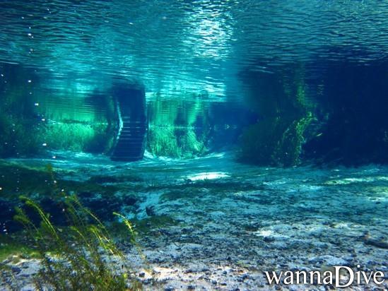 dive sites florida central springs ocala